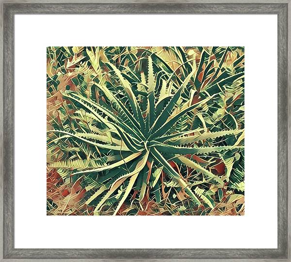 Aloha Aloe In Puna Framed Print