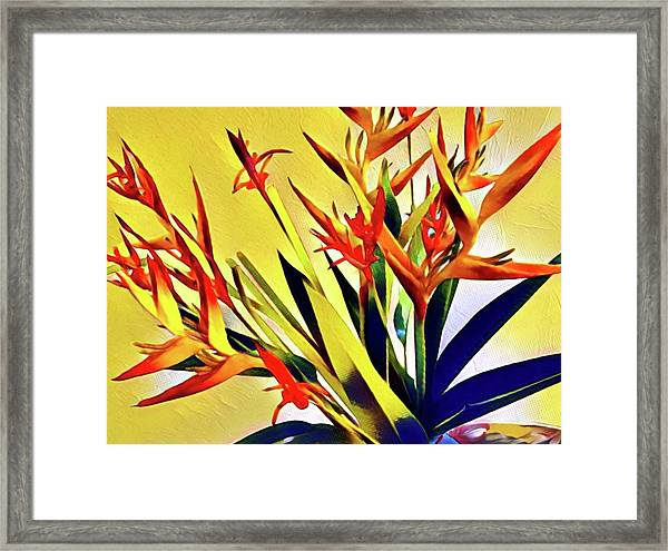 Aloha Bouquet Of The Day - Halyconia Birds In Orange Framed Print