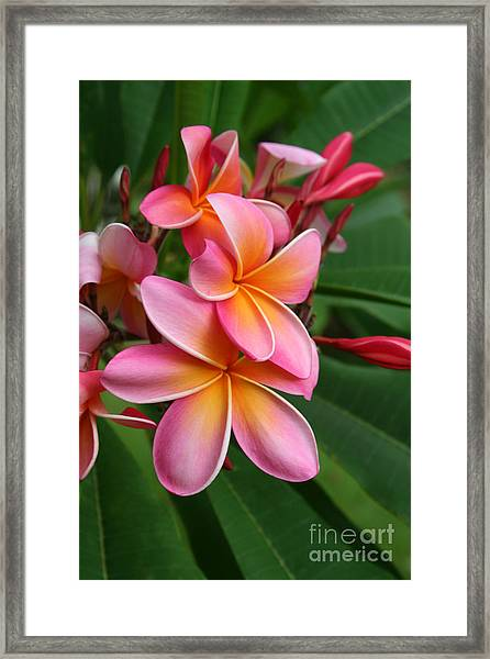 Aloha Lei Pua Melia Keanae Framed Print