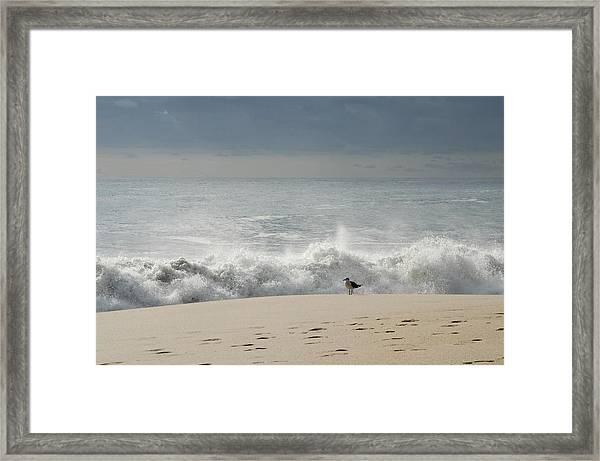 Alone - Jersey Shore Framed Print