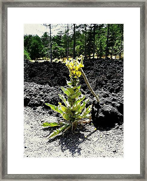 Alone Again Framed Print