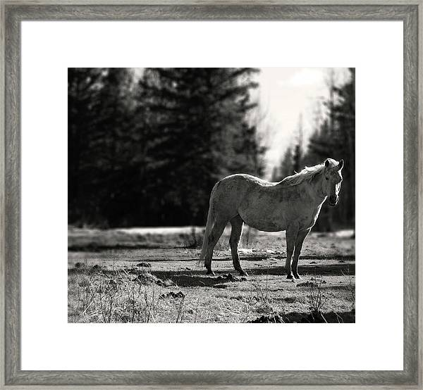 Alone In With Me Framed Print