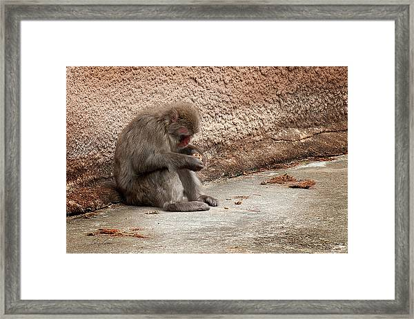 Alone With My Bread Crumbs Framed Print