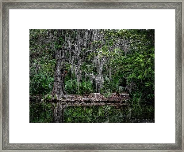 Along The Bank Framed Print