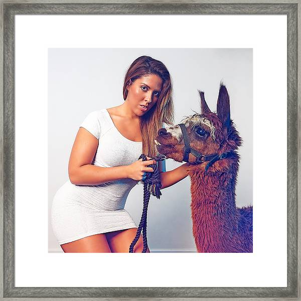 Alpaca Mr. Tex And Breanna Framed Print