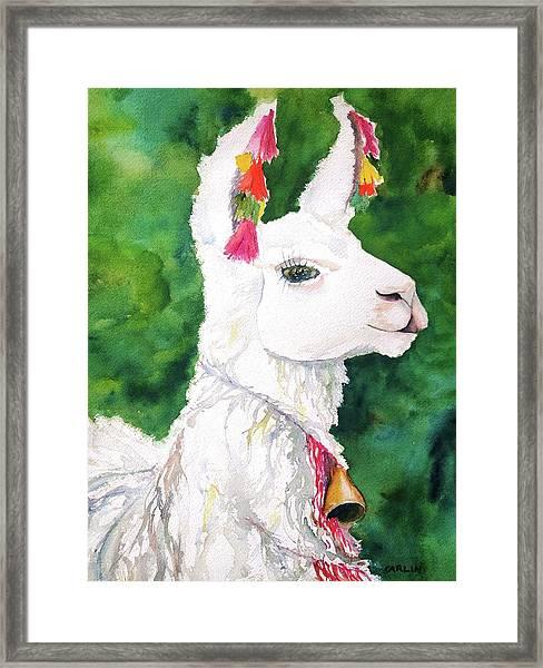 Alpaca With Attitude Framed Print