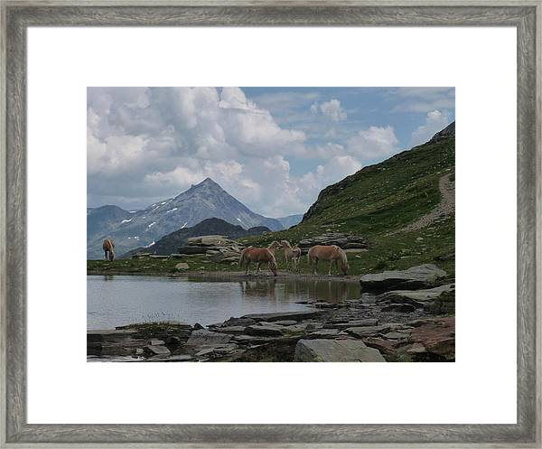 Alps' Horses Framed Print