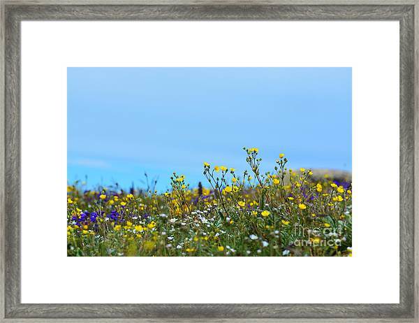 Framed Print featuring the photograph Alpine Wildflowers by Kate Avery