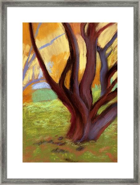 Alvarado Park Framed Print