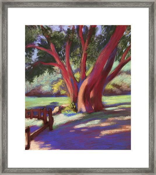 Alvarado Wildcat Canyon Framed Print