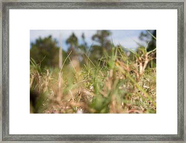 Always Searching Framed Print