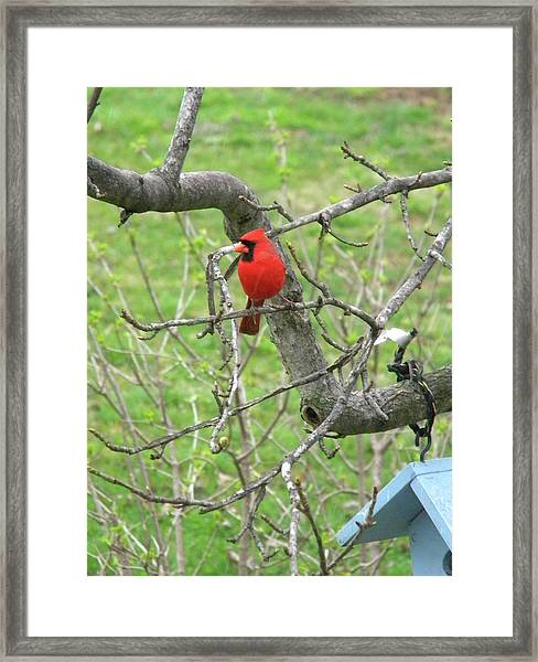 Always With Us -cardinals Framed Print