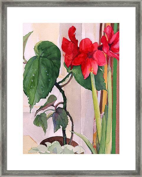 Amaryllis And Begonia Framed Print