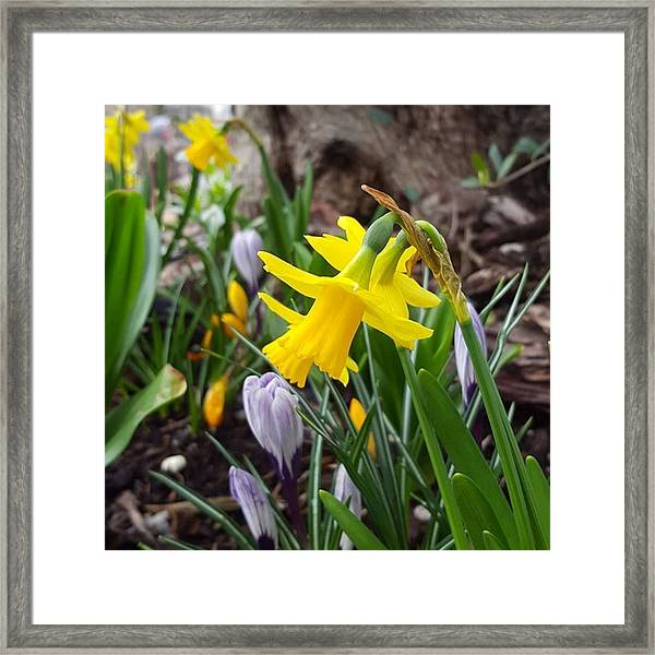 Amazing Spring Day Today, How Was It Framed Print by Dante Harker
