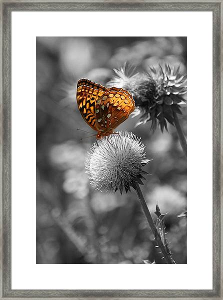 Amber Butterfly Colorized Framed Print