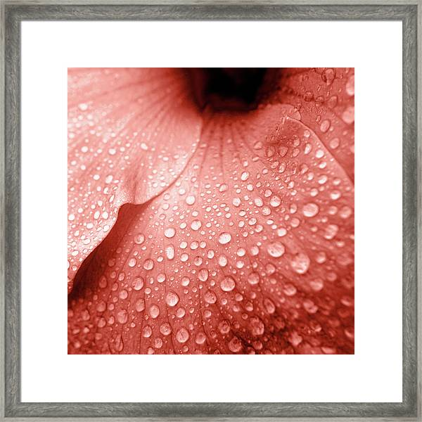 Amber Droplets Framed Print