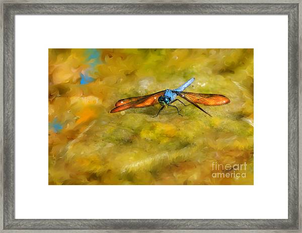 Amber Wing Dragonfly Framed Print