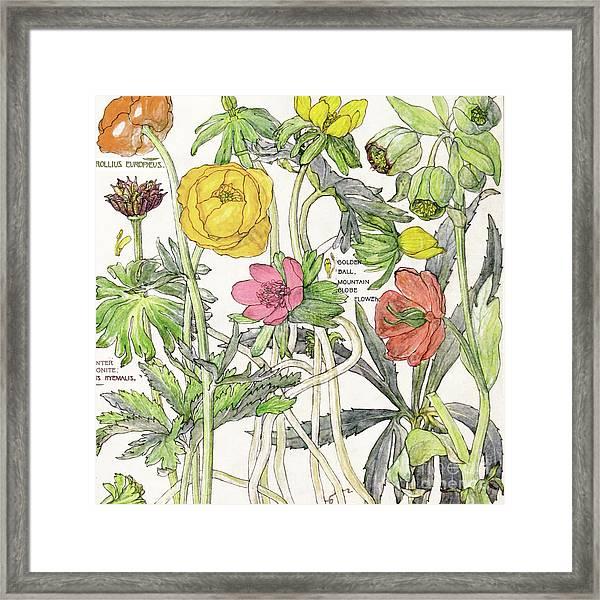Ambrosia Vi Framed Print