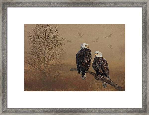 Framed Print featuring the photograph American Bald Eagle Family by Patti Deters