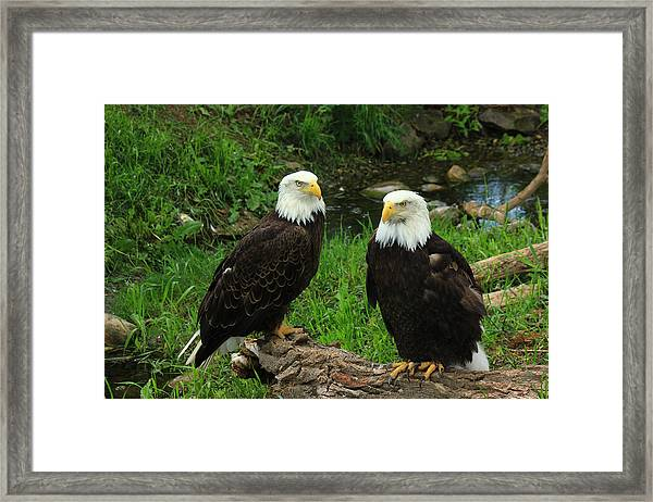 American Eagles Framed Print