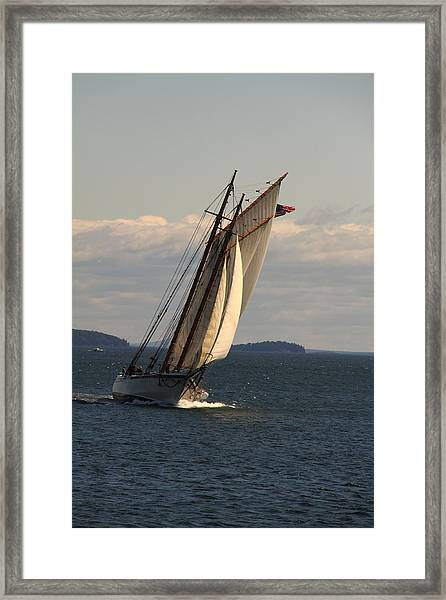 American Eagle In A Good Wind Framed Print