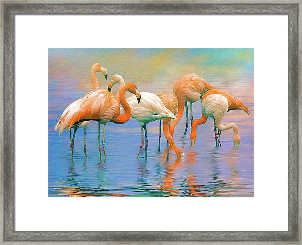 American Flamingos Framed Print