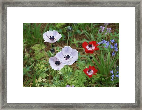 American Flowers Framed Print