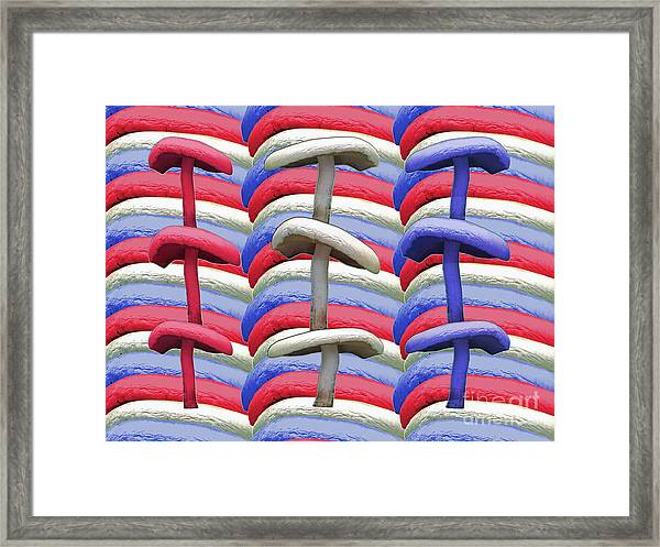 American Mushrooms Framed Print