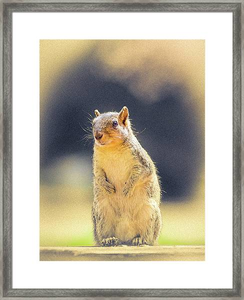 American Red Squirrel Framed Print
