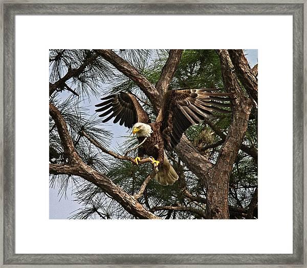America's Bird Framed Print