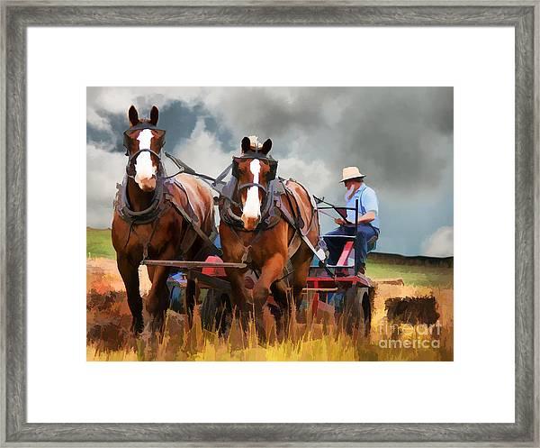 Amish Farmer Framed Print