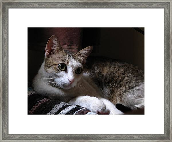 Ammani The Cat Framed Print