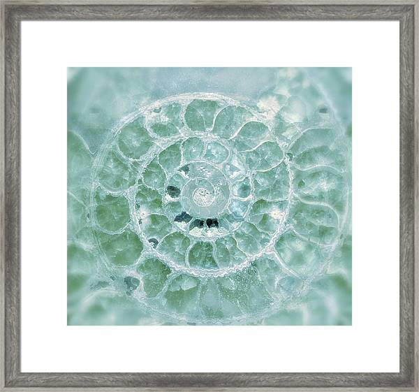 Ammonite Emerald Green Framed Print