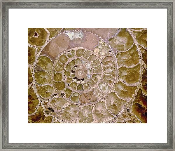 Framed Print featuring the photograph Ammonite by Gigi Ebert