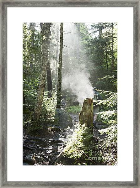 Ammonoosuc Ravine Trail - White Mountains New Hampshire Usa Framed Print