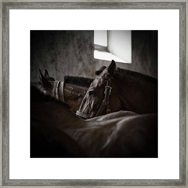 Among Others Framed Print