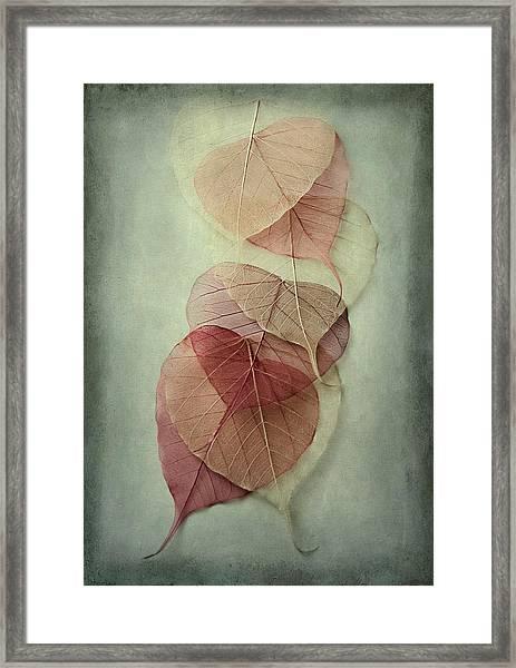 Among Shades Framed Print