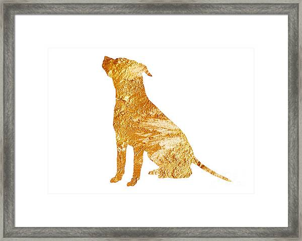 Amstaff Gold Silhouette Large Poster Framed Print