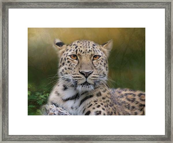 Framed Print featuring the photograph Amur Leopard by Patti Deters