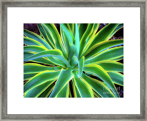 An Agave In Color  Framed Print