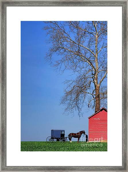 An Amish Scene Framed Print