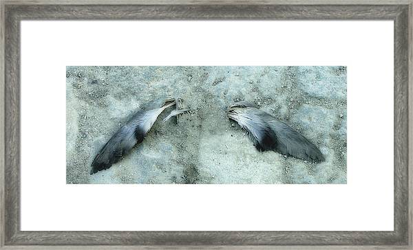 An Angel Must Have Lost Its Wings Framed Print
