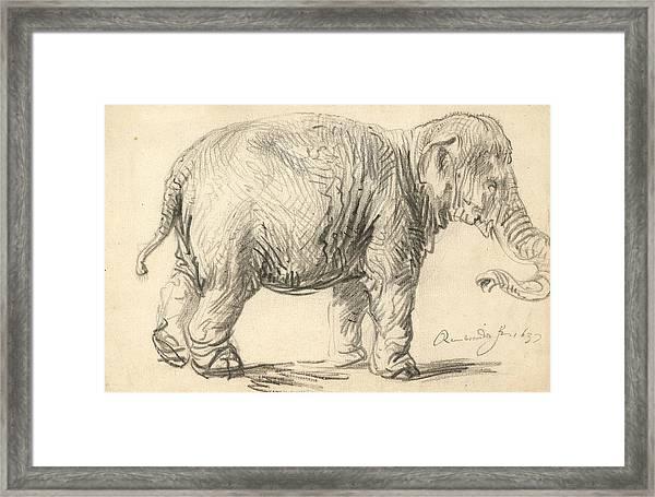 An Elephant Framed Print