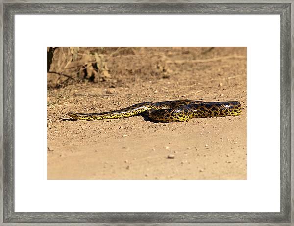 Anaconda Crossing Transpantaneira Framed Print