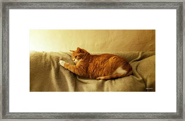 Framed Print featuring the digital art Anakin At Rest by Brian Gryphon