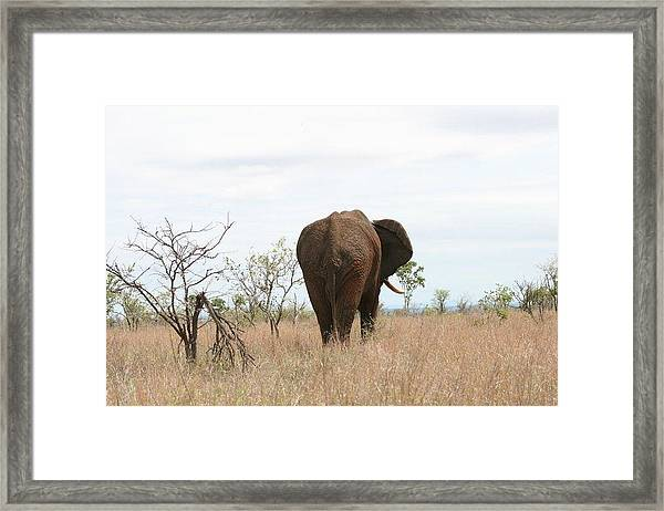 Ancient Elephant Framed Print by Debbie Cundy