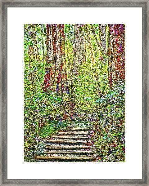Ancient Forest Path - Tamalpais California Framed Print