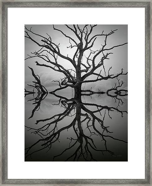 Ancient Oak Tree Montage Framed Print