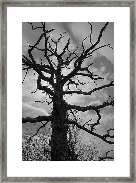 Ancient Oak Tree No. 4 Framed Print