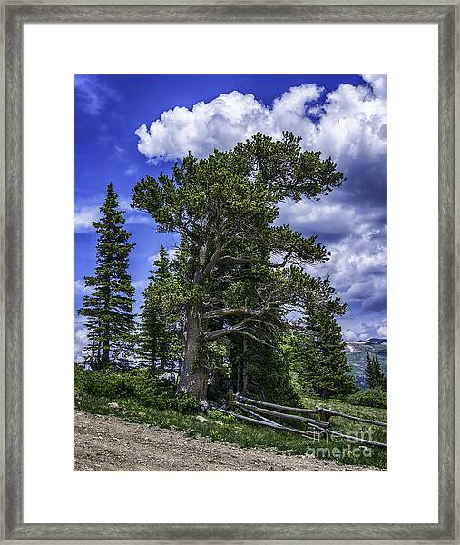 Ancient Winds Framed Print